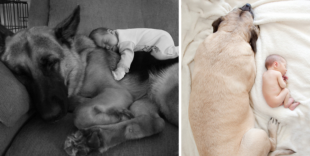 22+ Big Dogs Caring For Little Kids
