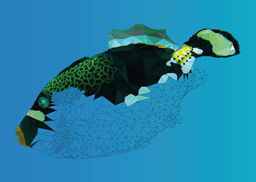 underwater-low-poly-illustrations-mordi-levi-4