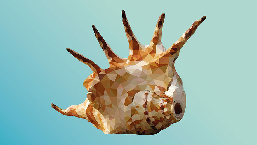 underwater-low-poly-illustrations-mordi-levi-9