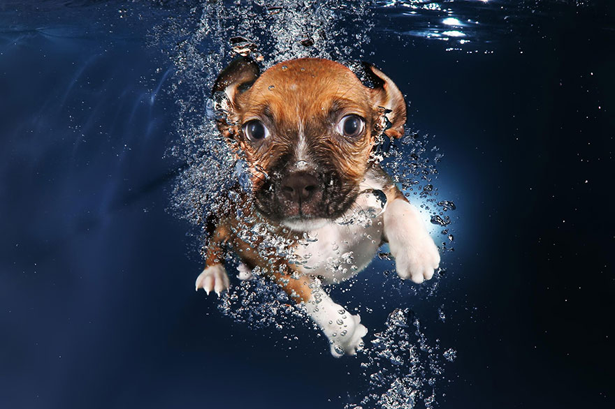 underwater-puppy-photography-seth-casteel-10