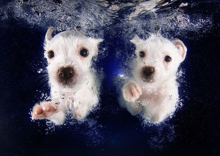 New Playful Underwater Puppy Photo Series By Seth Casteel