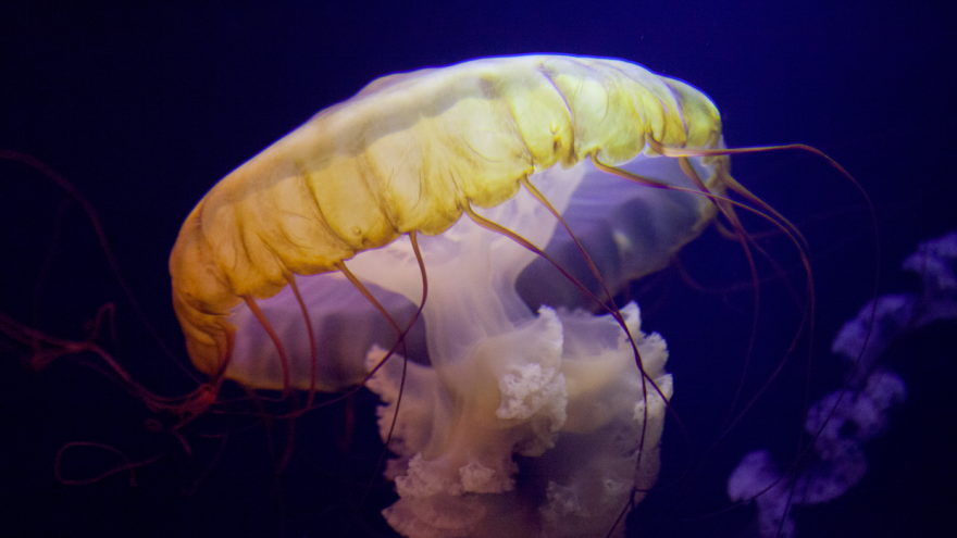 Barcelona Media Design / Jellyfish, Atlantis, The Bahamas