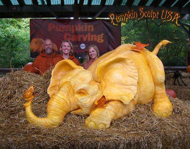 900lb Pumpkin Carving Raises Awareness Of Elephant