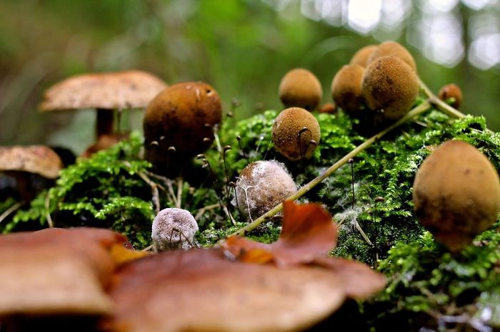 Mushroomcity