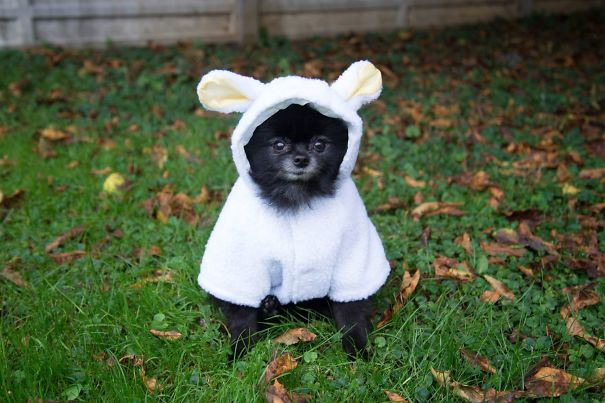 A Woof In Sheep Clothing. :)