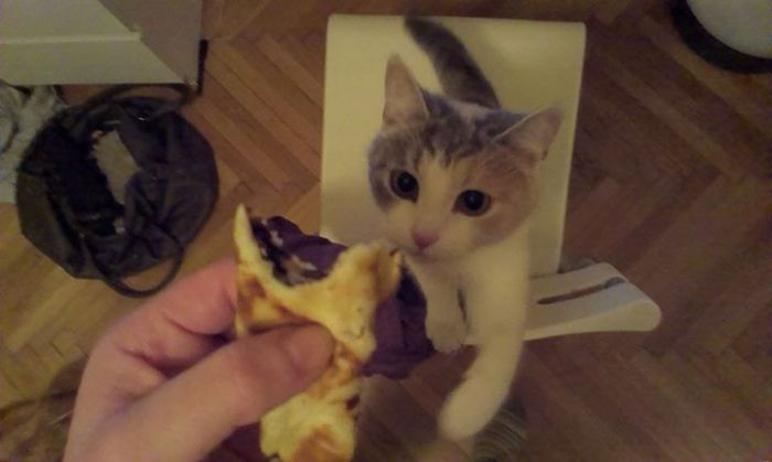 Pancake Thief