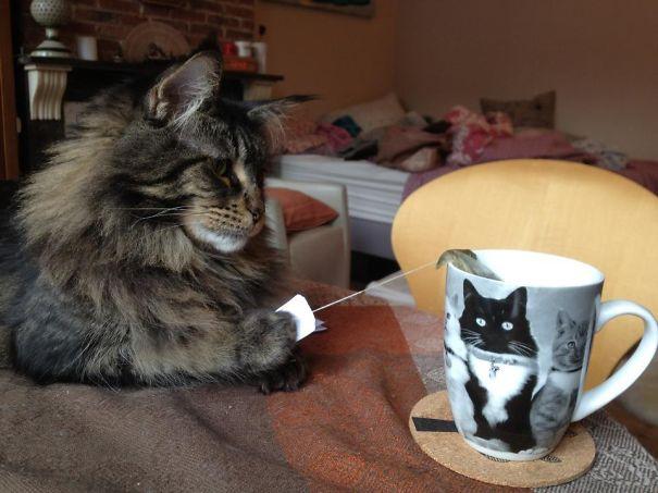 Tea Time Saboteur