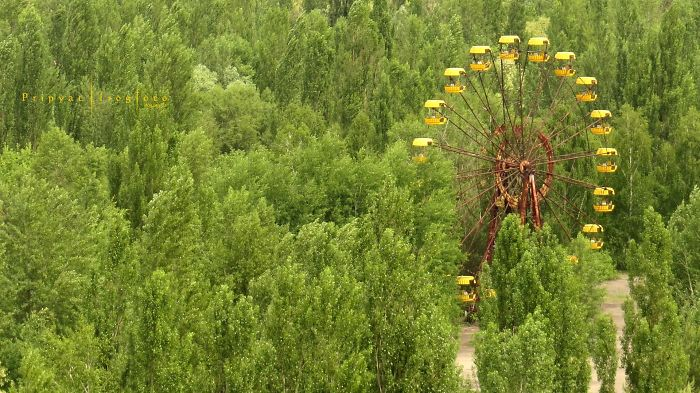 Life In Chernobyl After The Accident: Nature Wins The Battle Against Civilization