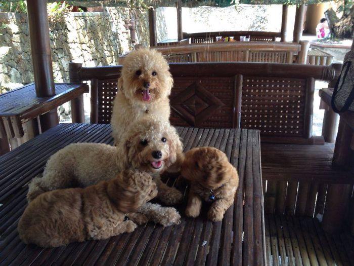 Djoko's Family