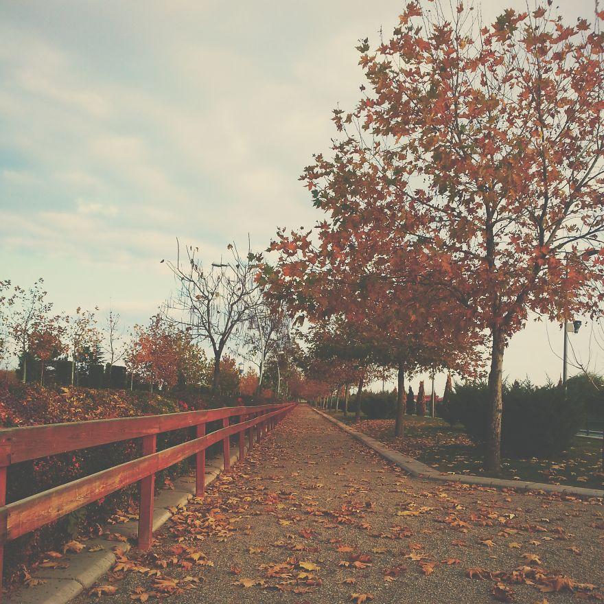 Fall In Eskisehir, Turkey.