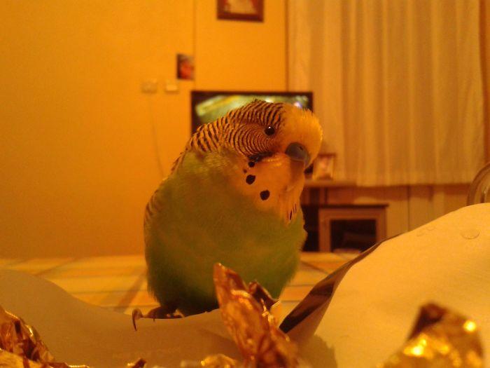 Look At My Pretty Bird :)