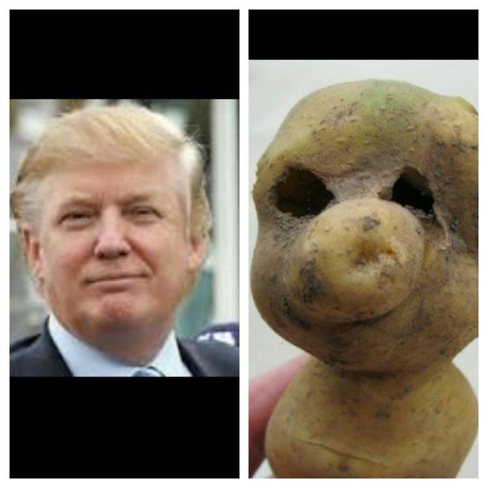 Donald Trump's Look-alike