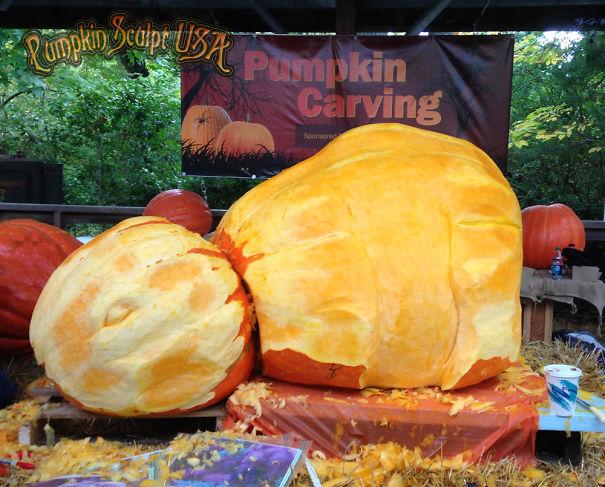 Huge pumpkin carving raises awareness of elephant plight for How to carve an elephant on a pumpkin