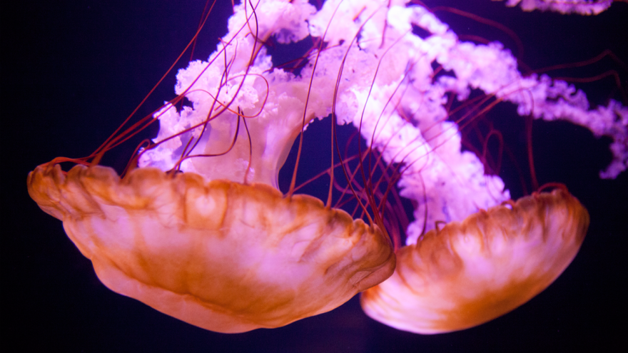 Barcelona Media Design / Jellyfish, Atlantis, The Bahamas