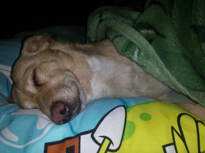 Looks Like Mimi Is Dreaming Of Something Nice