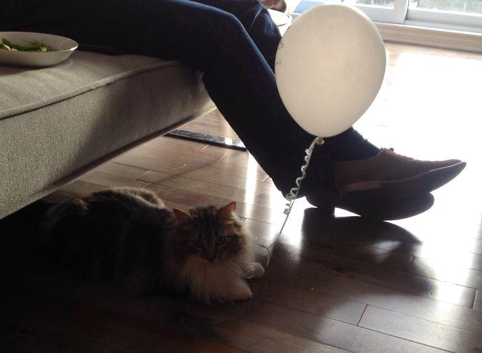 Balloon Theif