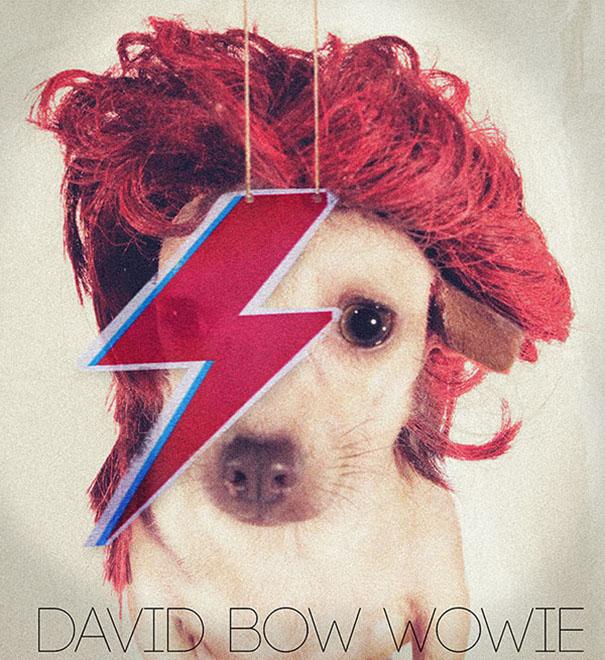 David Bow Wowie