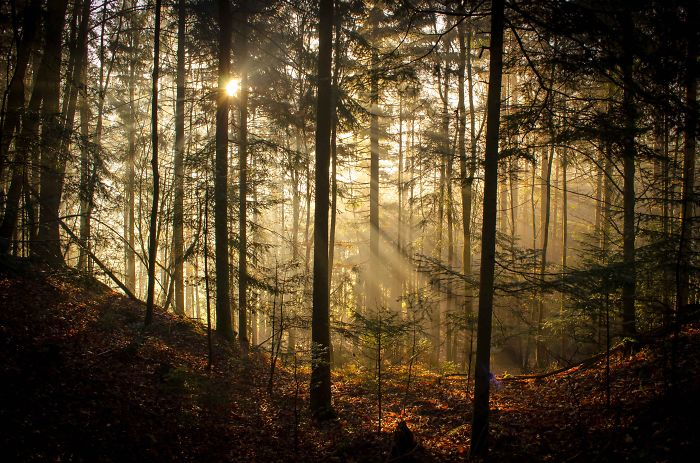 May The Forest Be With You: Post Your Favourite Pictures Of Forests