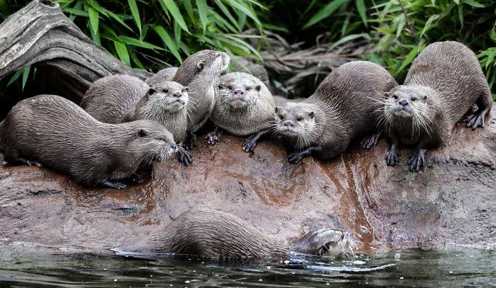 Otter Family Photo
