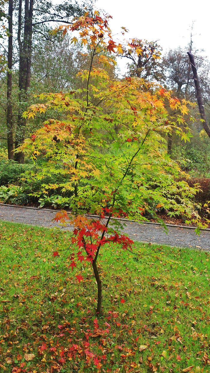 Autumn Colours Iii.