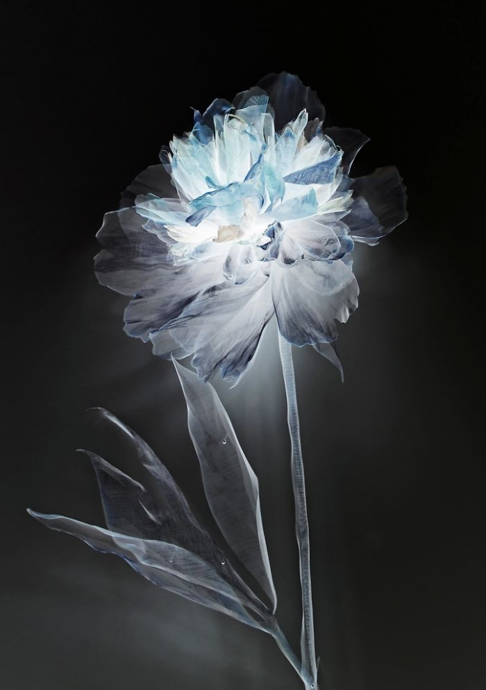 """ghost Editions"" By Michelle Mckinney Artist"