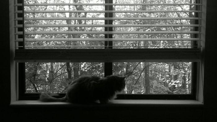 My Cat Ewok.