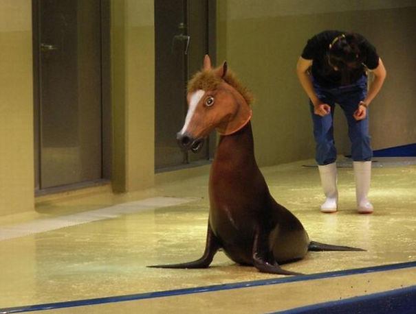 Horse Seal