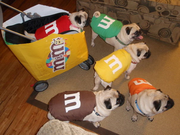 M&m's Pugs