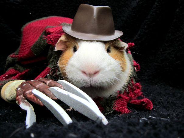 #25 Freddy Krueger Guinea Pig & 25+ Terrifyingly Cute Halloween Costumes For Pets | Bored Panda
