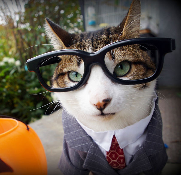 Business Guy Cat