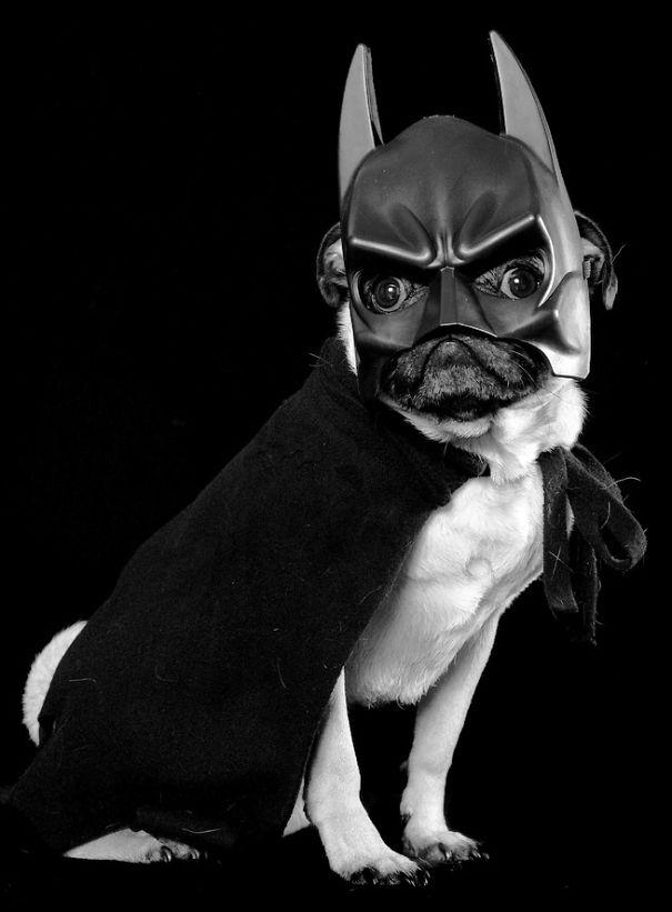Batpug