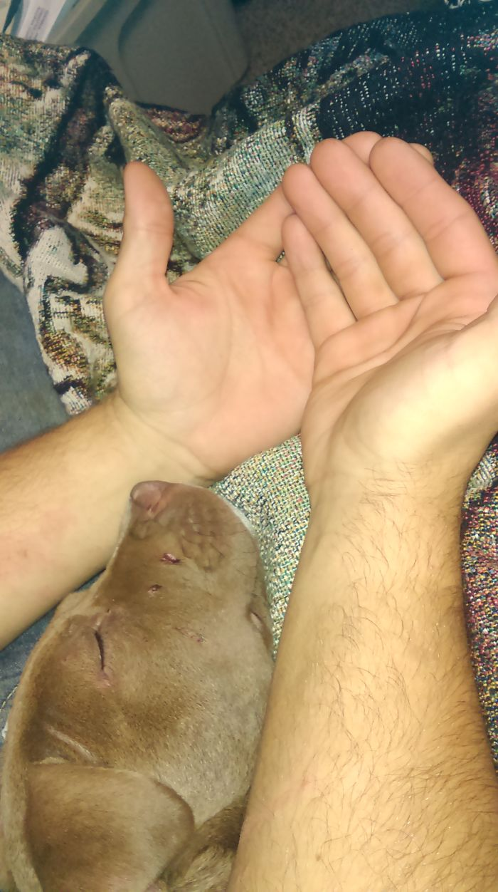 Briar And My Mans Hands.