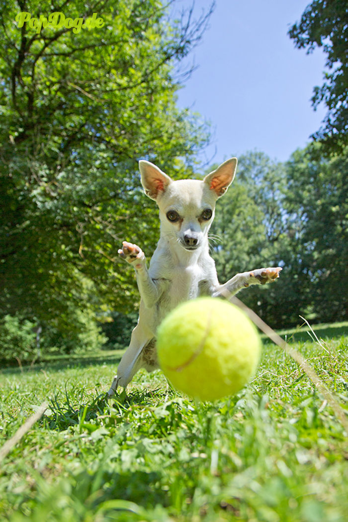 Tennis Ball Addict