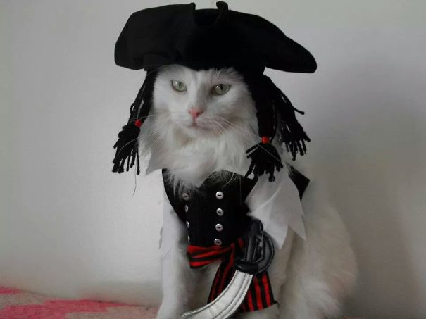 Ghato As Cat Sparrow