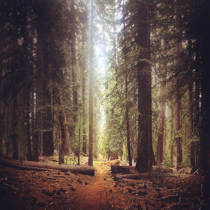 Trail Of Light