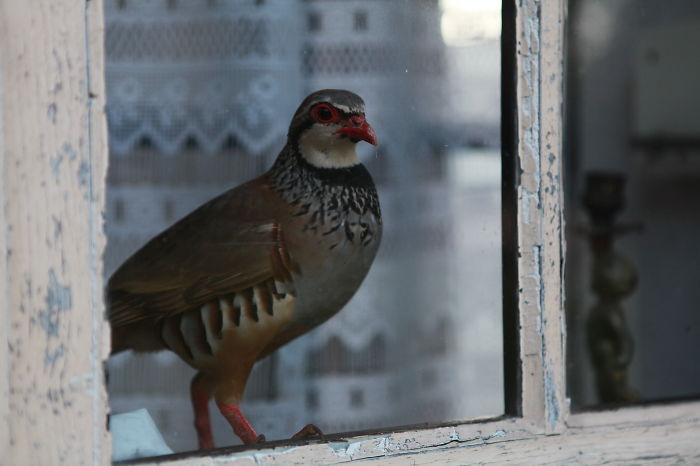 Oiseau Sologno...