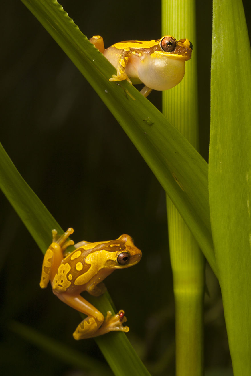in search of lost frogs my epic quest to photograph the rarest