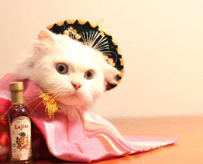 Mexican Kitty