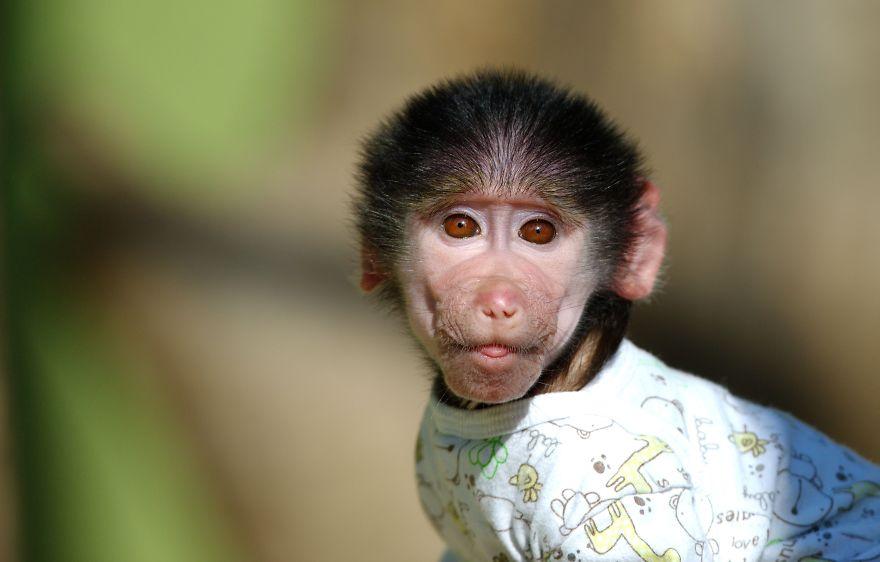 совершенно картинка обезьянка в мире покупаете