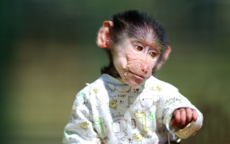 Cute Monkeys In Clothes