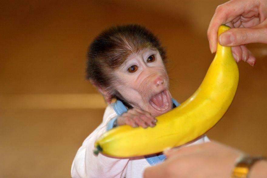 Cute Baby Monkey From Skopje Zoo Gets Treated Like A Child Bored Panda