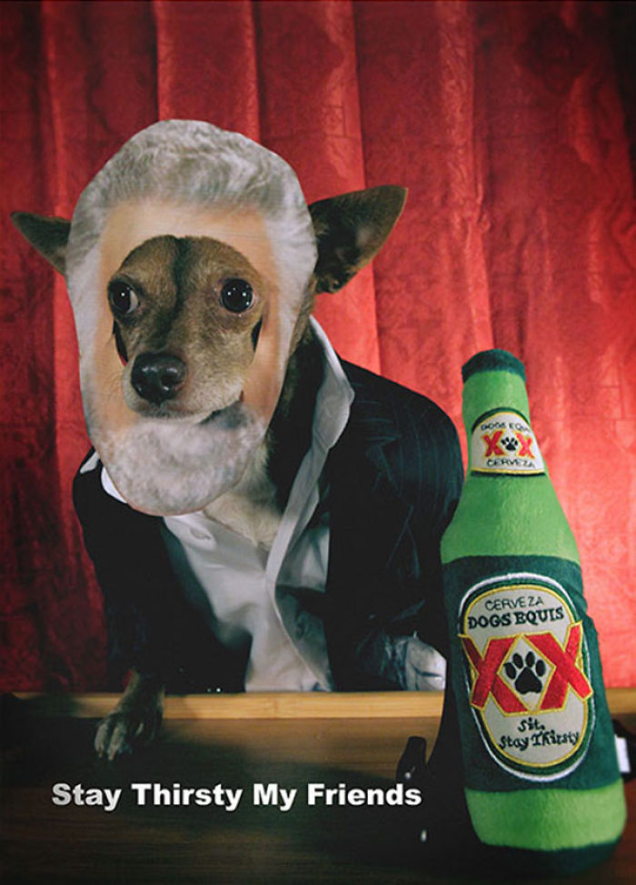 """""""the Most Interesting Dog In The World"""""""