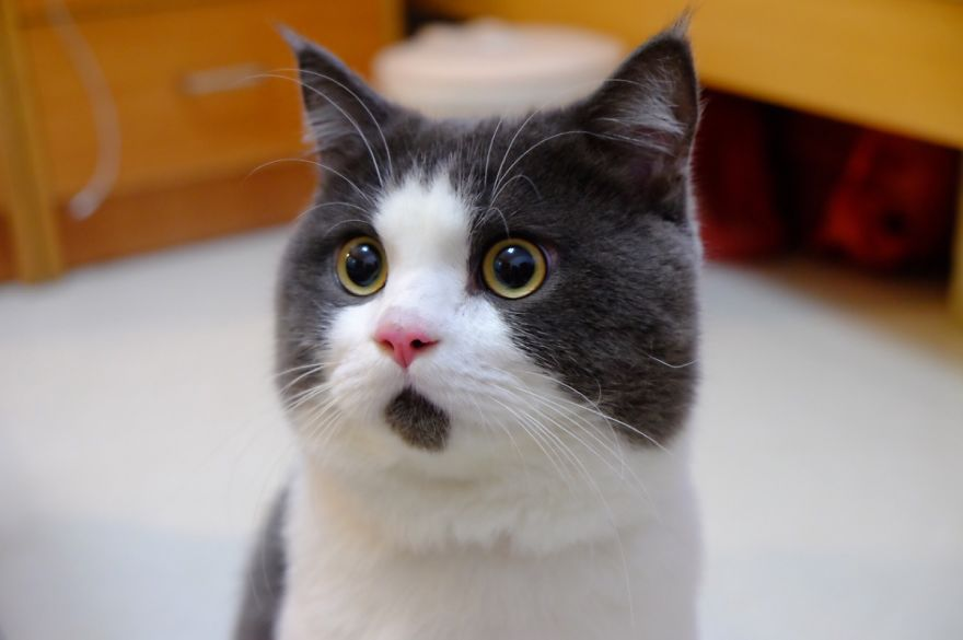 Image result for surprised cat
