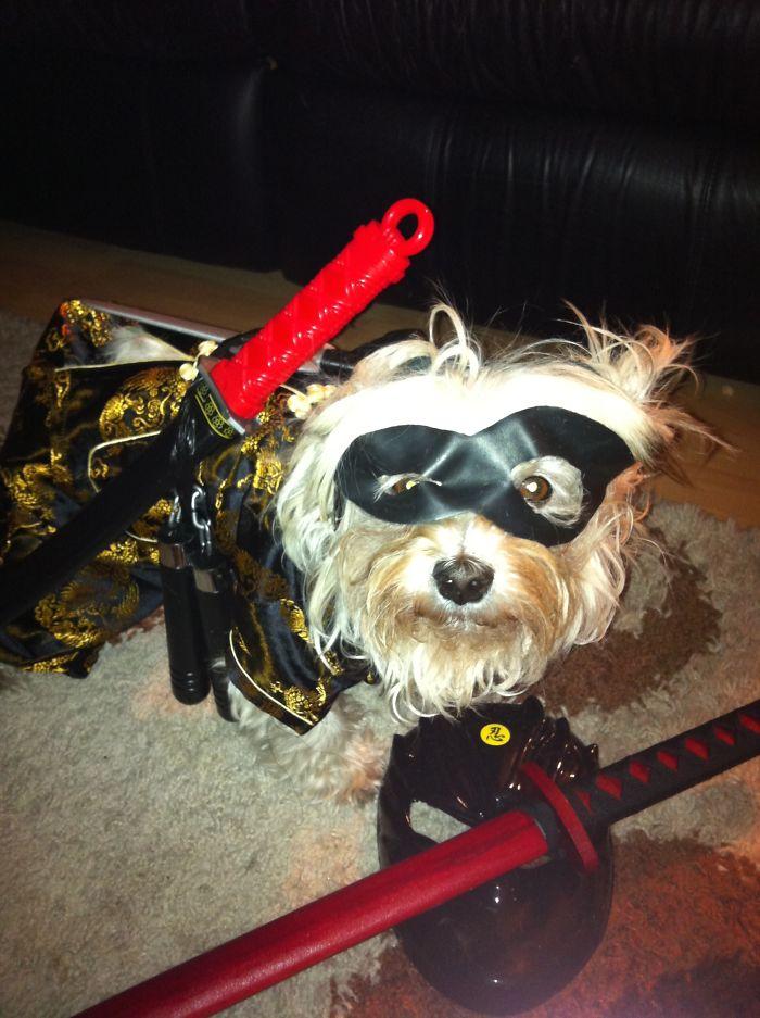 Ninja Mr. Peabody
