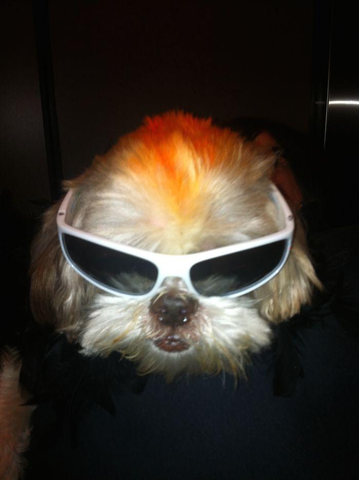 Rocker Reggie