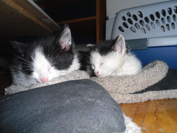 Kitties In Slippers