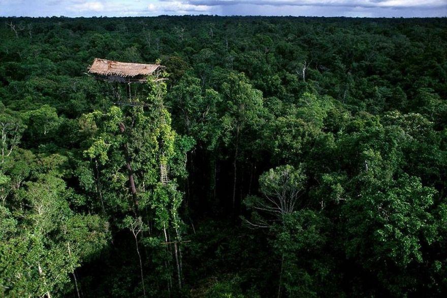 Korowai Tribe House In Tree, Papua New Guinea