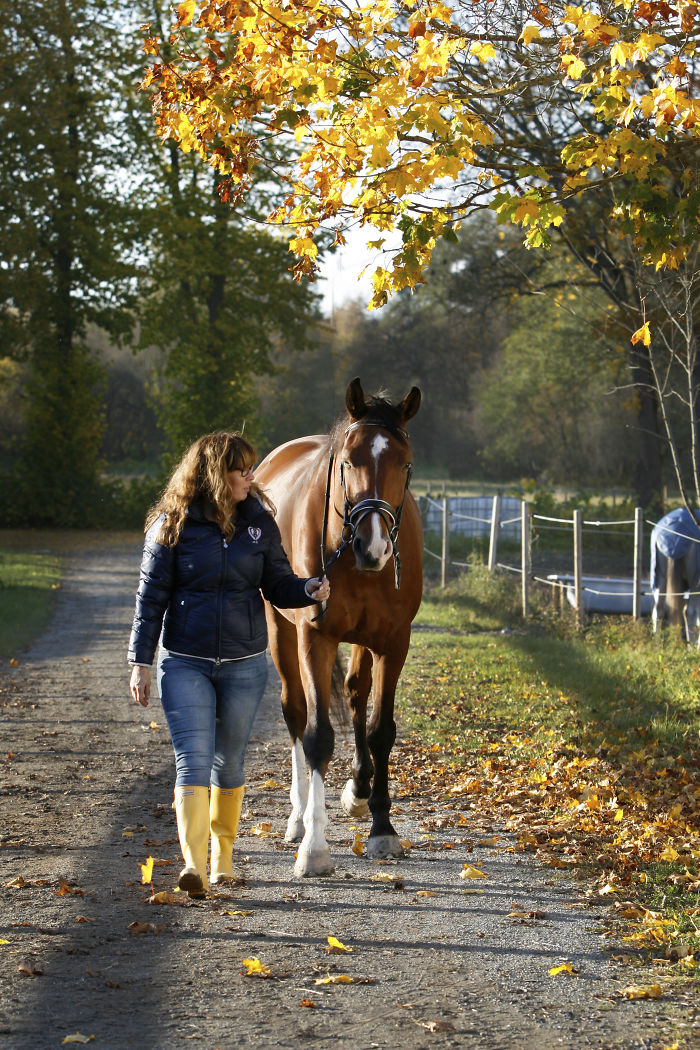 Equine Autumn