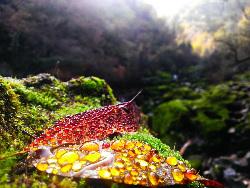 Raindrops On A Leaf, Montenegro