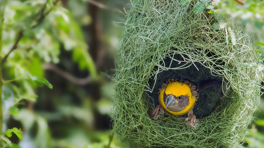 animal-architecture-nests-8-3
